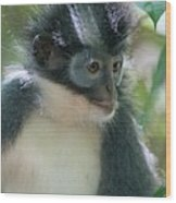 Northern Sumatran Leaf Monkey Wood Print