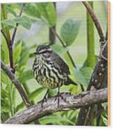 Northern Water Thrush Wood Print