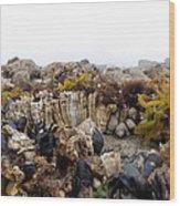 Nye Beach Wood Print by Roxanne Luckman