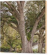 Oak Alley Backyard Wood Print