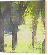 Oaks 25 Wood Print