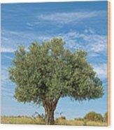 Olive Tree Wood Print