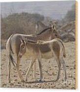 Onager Equus Hemionus 1 Wood Print