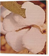 Open Cotton Boll Wood Print