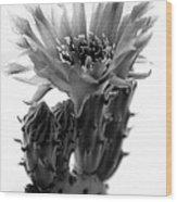 Opuntia Basilaris Cactus Wood Print