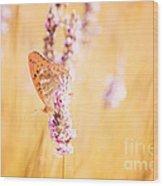 Orange Butterfly Wood Print