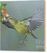 Orange-crowned Warbler Wood Print