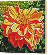 Orange Dahlia On Taquille Island In Lake Titicaca-peru  Wood Print