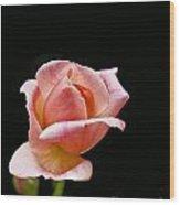 Orange Rose Bud Wood Print