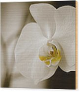 Orchid Wood Print by Ivelin Donchev