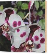 Orchid One Wood Print