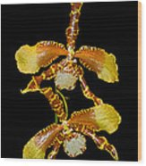 Orchid Series 104 Wood Print