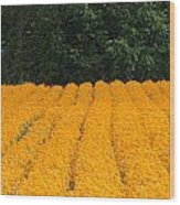 Oregon Orange Field Panoramic Wood Print