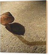 Oregon Snail Wood Print