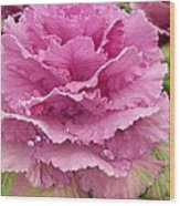 Ornamental Cabbage Wood Print