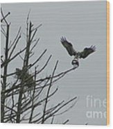 Osprey Love Wood Print