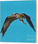 Osprey With Catch Wood Print