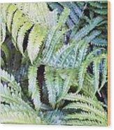Ostrich Fern Wood Print