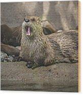 Otter North American  Wood Print