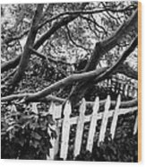 Overflowing A Picket Fence Wood Print
