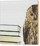 Owl At A Book Pile Wood Print