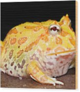 Pac Man Frog Ceratophrys Wood Print