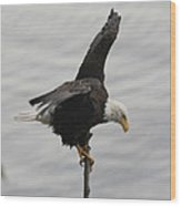 Pacific Northwest Eagle II Wood Print