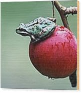 Pacific Tree Frog On A Crab Apple Wood Print