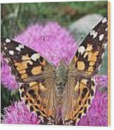 Painted Lady Butterfly Up Close Wood Print