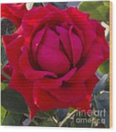 Painting Of A Rose Wood Print