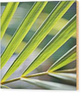 Palm Leaves Pattern Wood Print