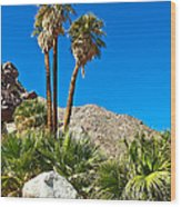 Palm Oasis On Borrego Palm Canyon Trail In Anza-borrego Desert Sp-ca Wood Print