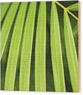 Palm Tree Leaf Wood Print