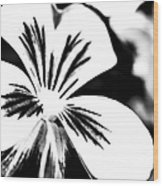 Pansy Flower Black And White 01 Wood Print