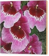 Pansy Orchid 1 Wood Print