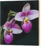 Paphiopedilum Hybrid  Wood Print