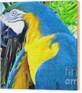 Blue Yellow Macaw. Parrot. Photo Of Bird Wood Print