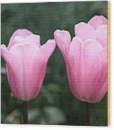 Parrot Tulip Mystic Mistress  Wood Print