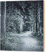 Path In Dark Forest Wood Print by Elena Elisseeva