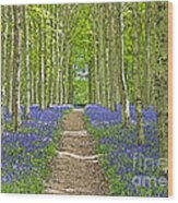 Path Through Bluebells Resembling Water Colour Wood Print