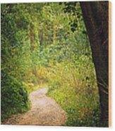 Pathway In The Woods Wood Print