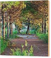 Pathway Through Colorful Forest In Fall Autumn Wood Print