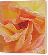 Peach Rose Wood Print