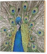 Peacock Full Plumage Wood Print