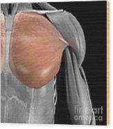 Pectoralis Major Muscle Wood Print