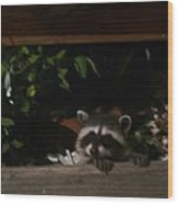 Peek-a-boo Baby Wood Print by Jacquelyn Roberts