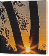 Peeking Sun Wood Print