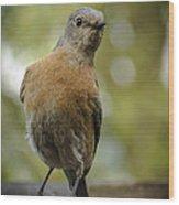 Peering Bluebird Wood Print