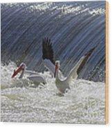Pelican Drama Wood Print