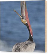 Pelican Head Throw Wood Print